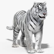 Tiger White (Fur) 3d model