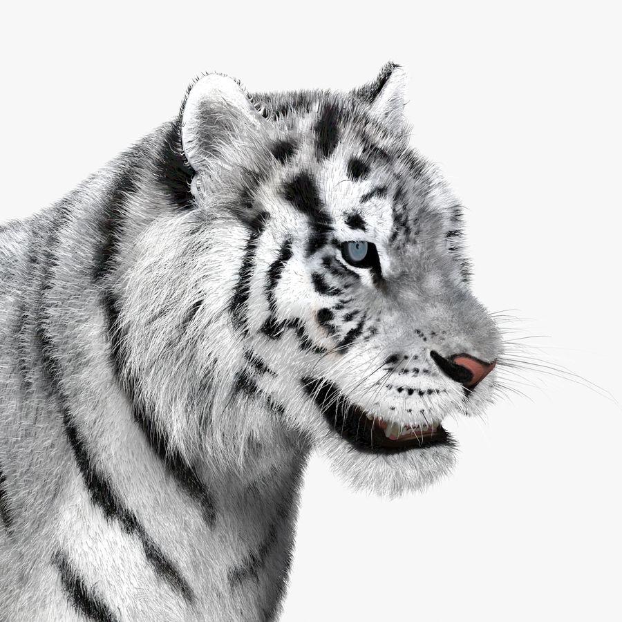 Tigre Branco (Pele) royalty-free 3d model - Preview no. 13