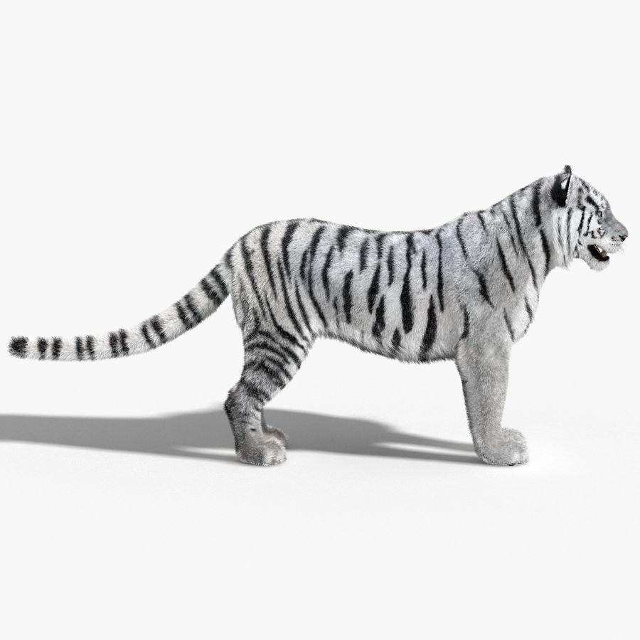 Tigre Branco (Pele) royalty-free 3d model - Preview no. 8