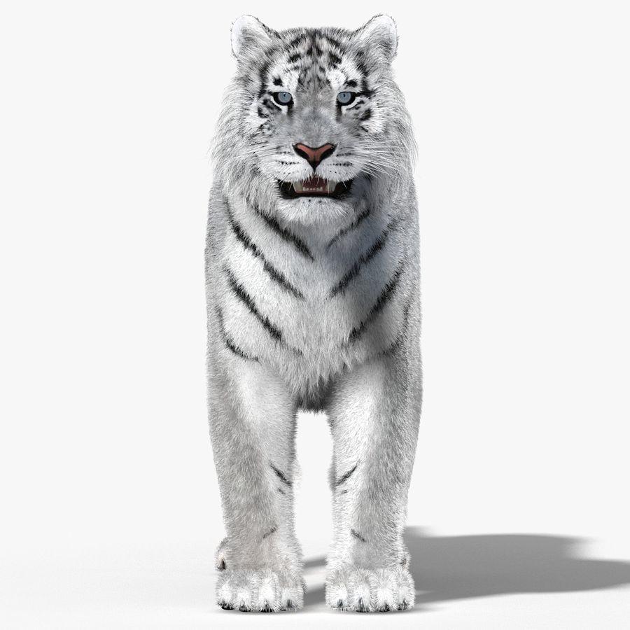 Tigre Branco (Pele) royalty-free 3d model - Preview no. 6