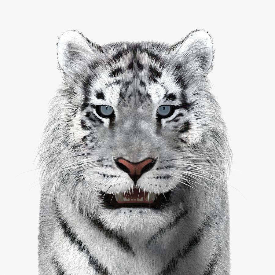 Tigre Branco (Pele) royalty-free 3d model - Preview no. 14