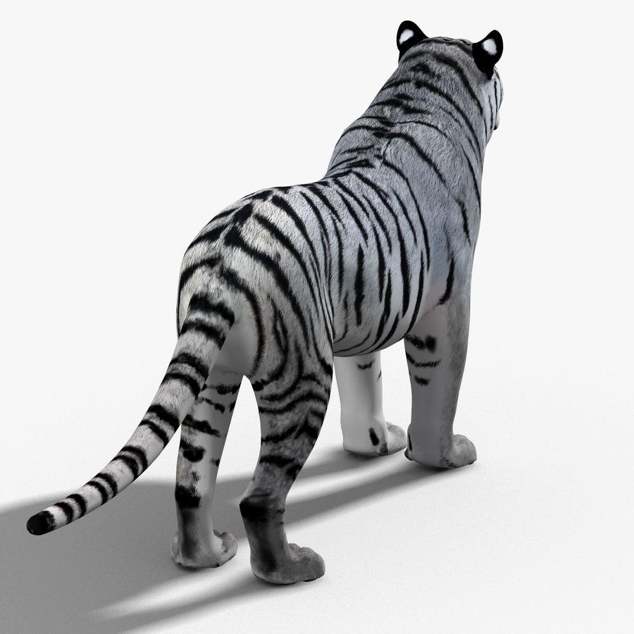 Tigre Branco (Pele) royalty-free 3d model - Preview no. 16