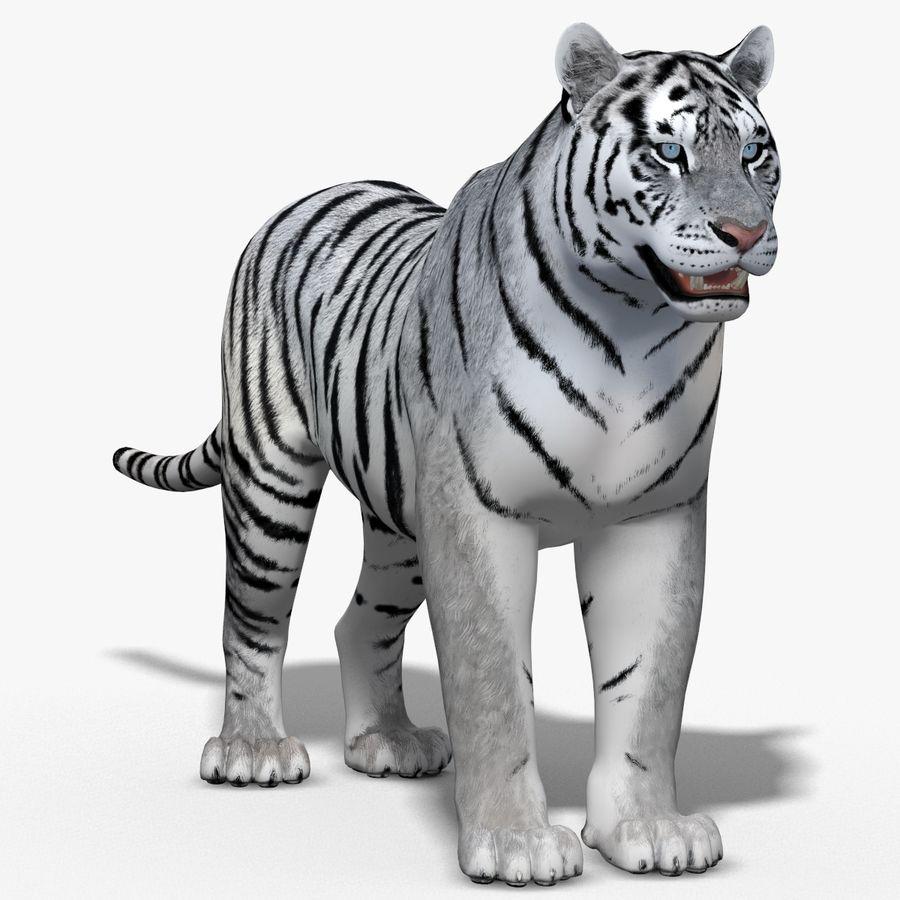 Tigre Branco (Pele) royalty-free 3d model - Preview no. 15