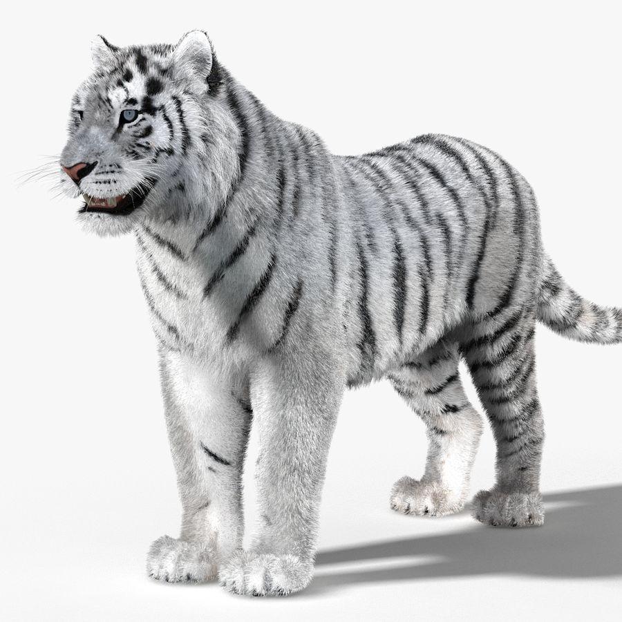 Tigre Branco (Pele) royalty-free 3d model - Preview no. 5