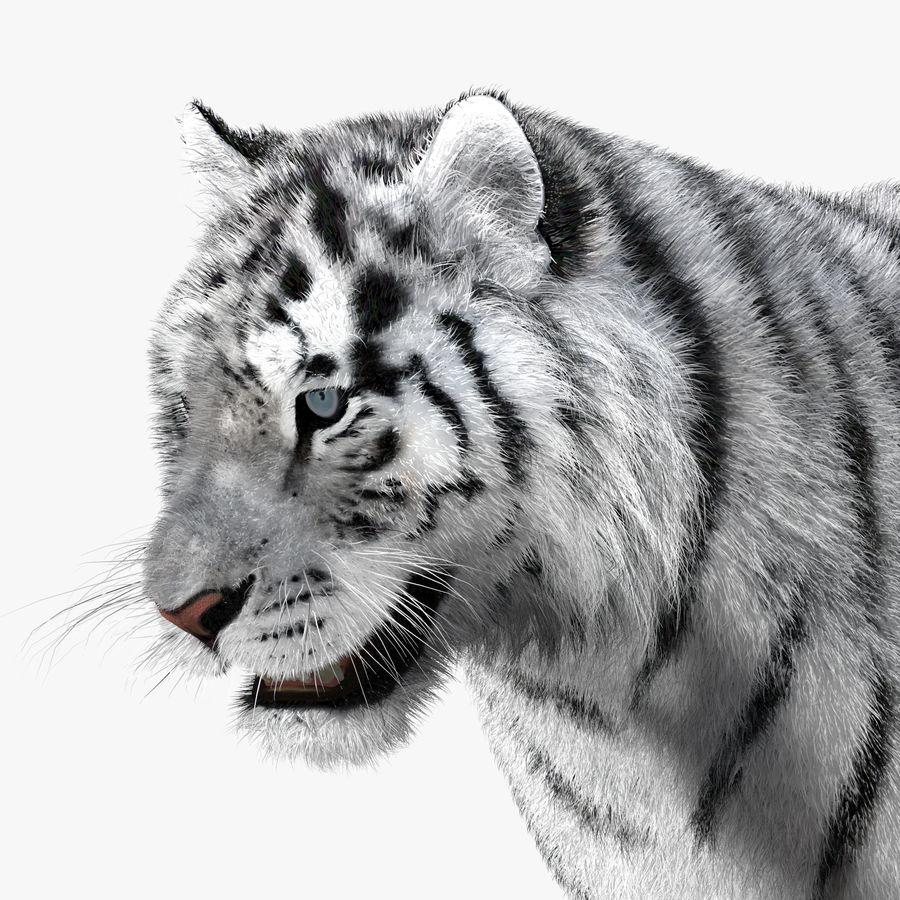 Tigre Branco (Pele) royalty-free 3d model - Preview no. 12
