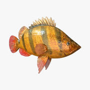 Tiger  Fish 3d model