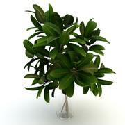 Rurociąg roślinny 3d model