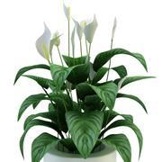 Rośliny w doniczce 3d model