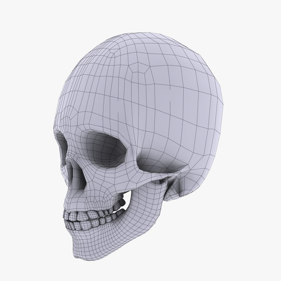 İnsan kafatası royalty-free 3d model - Preview no. 8
