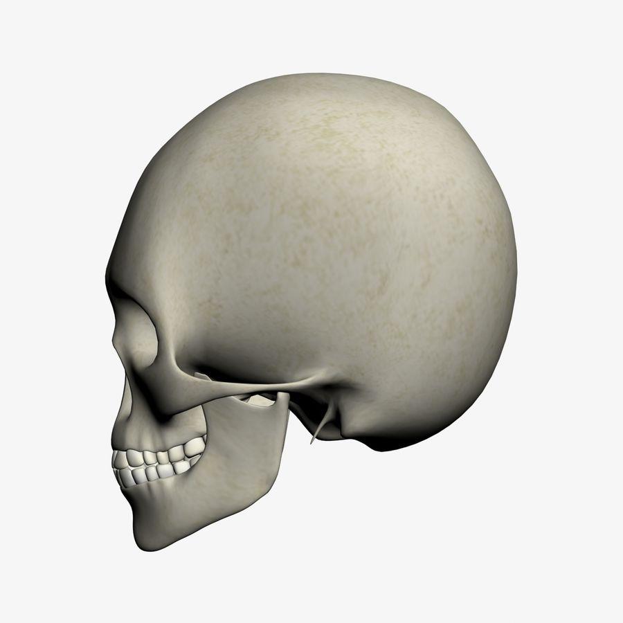 İnsan kafatası royalty-free 3d model - Preview no. 4