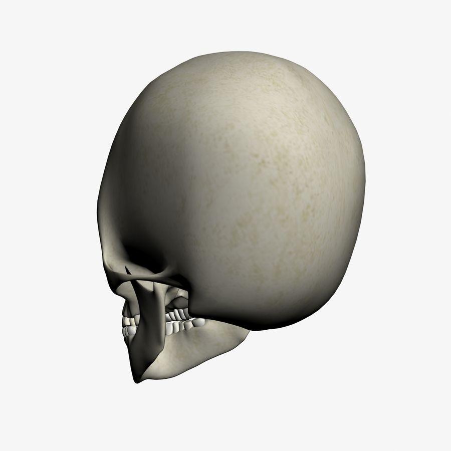 İnsan kafatası royalty-free 3d model - Preview no. 5