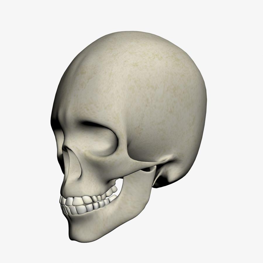 İnsan kafatası royalty-free 3d model - Preview no. 3