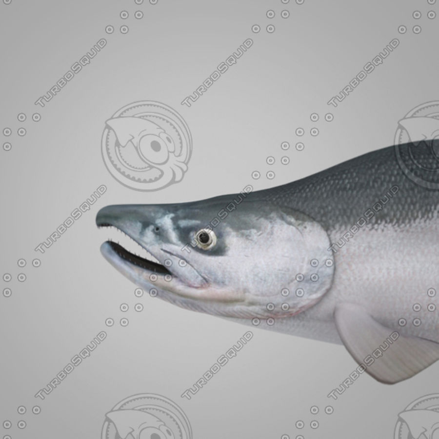 sockeye - zalm royalty-free 3d model - Preview no. 1