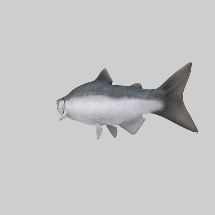 sockeye - zalm royalty-free 3d model - Preview no. 4