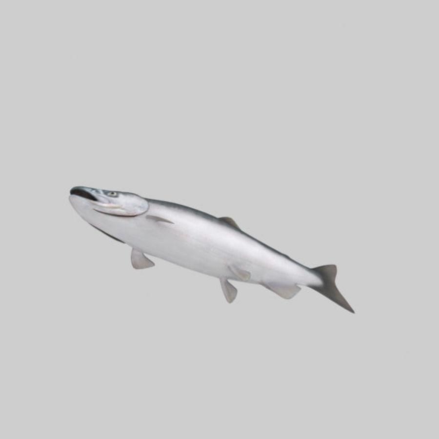 sockeye - łosoś royalty-free 3d model - Preview no. 5