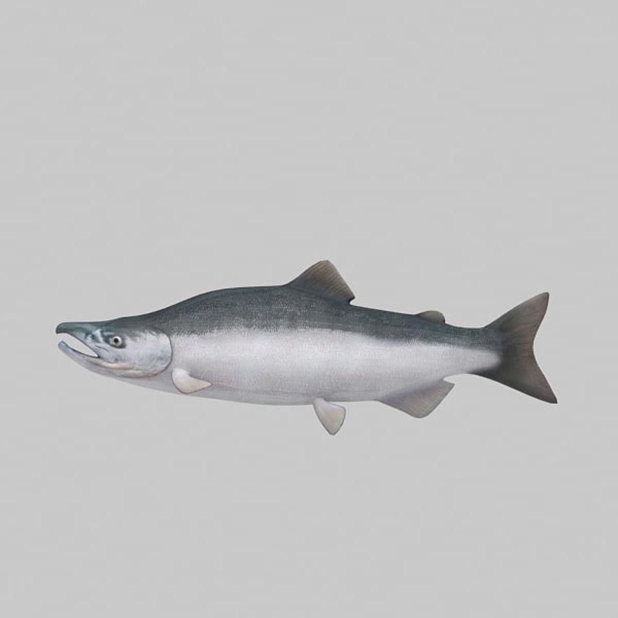 sockeye - salmone royalty-free 3d model - Preview no. 2