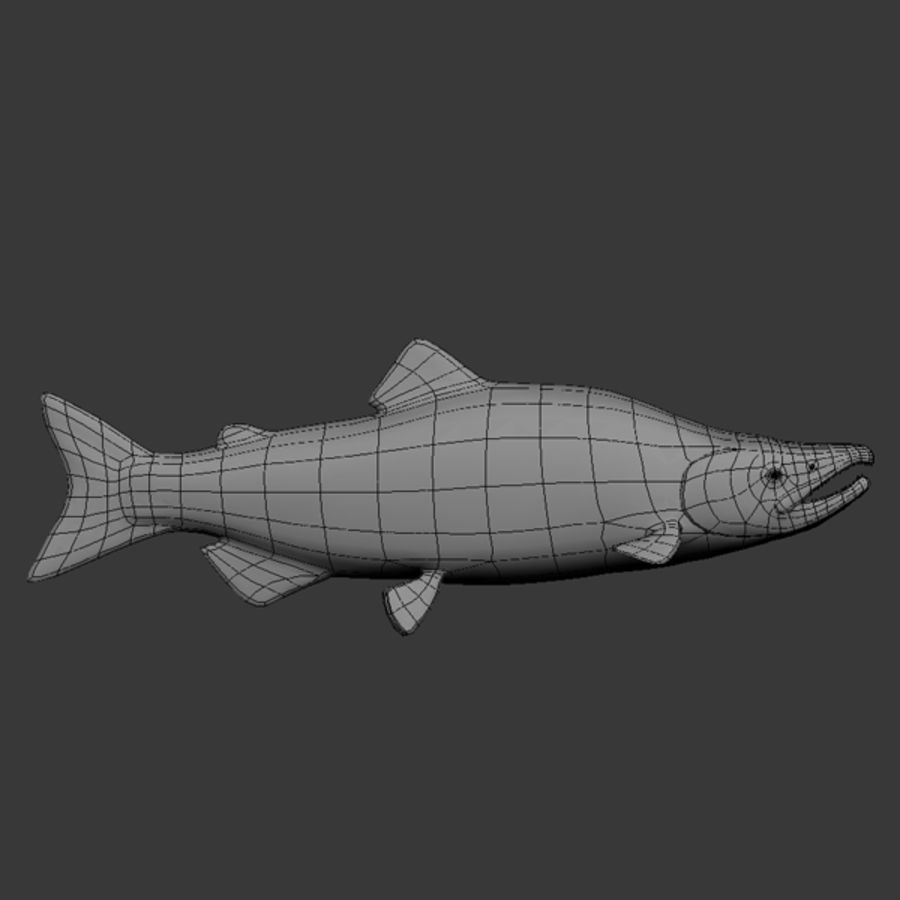sockeye - zalm royalty-free 3d model - Preview no. 7
