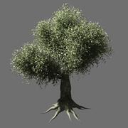 Olive Tree 2 3d model