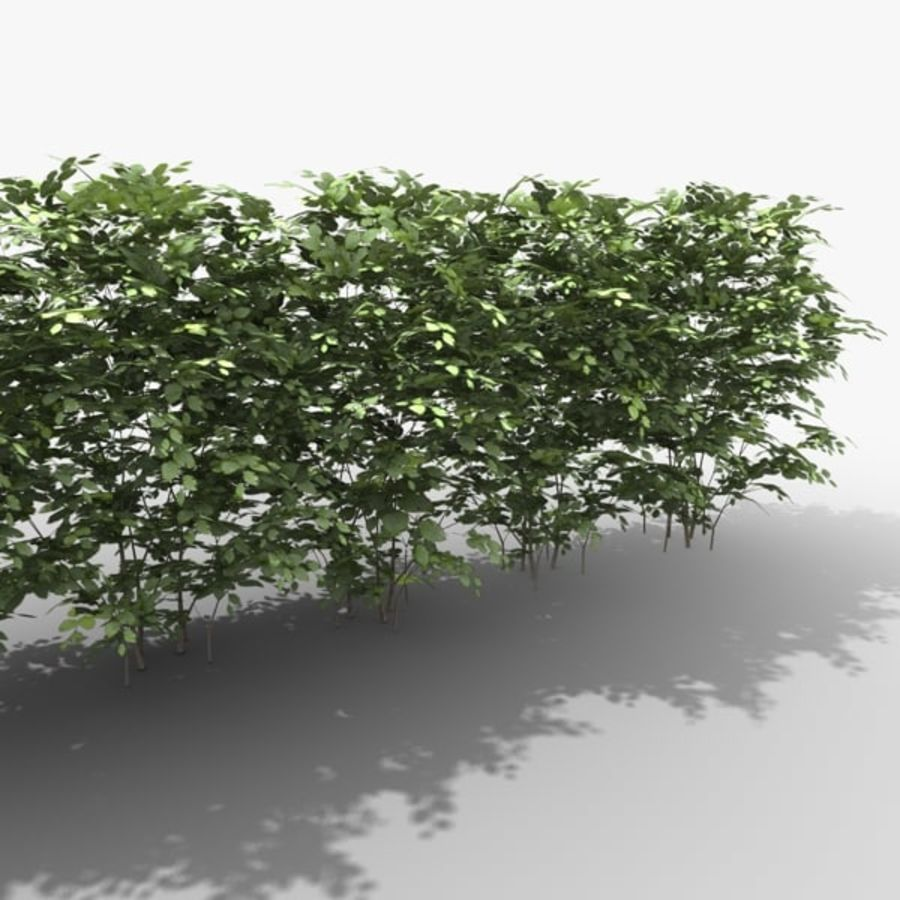Crowded Common Beech Hedge royalty-free 3d model - Preview no. 4