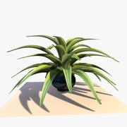 Dracaena Plant 3d model