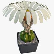 Ariocarpus Scaphirostris (Cactus) 3d model