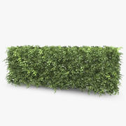 Common Beech Hedge 3d model