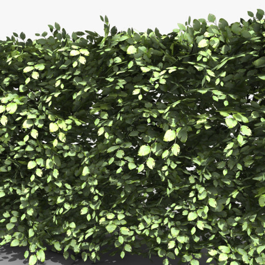Common Beech Hedge royalty-free 3d model - Preview no. 3