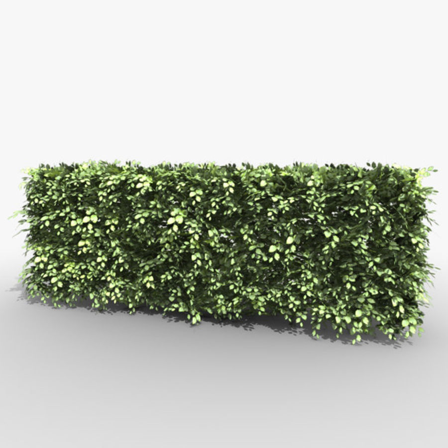 Common Beech Hedge royalty-free 3d model - Preview no. 2