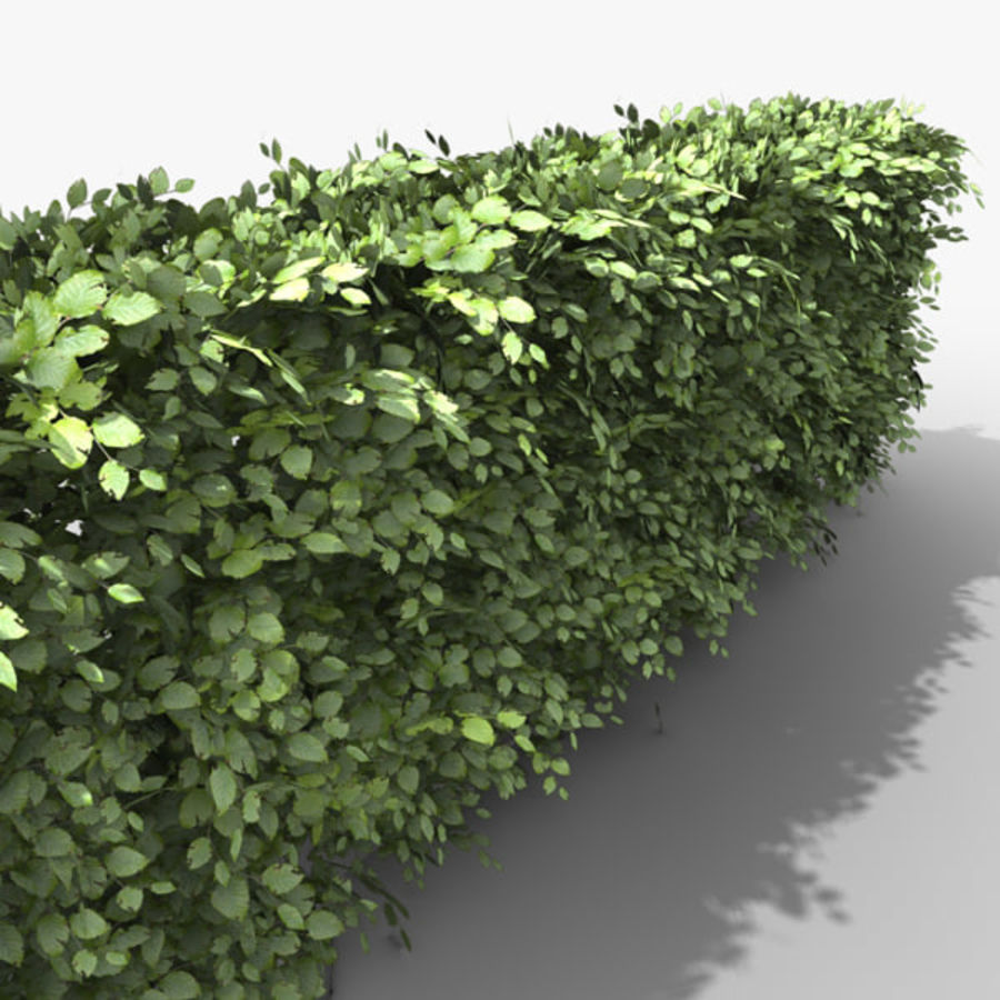 Common Beech Hedge royalty-free 3d model - Preview no. 4