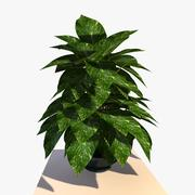 Pothos Plant 3d model