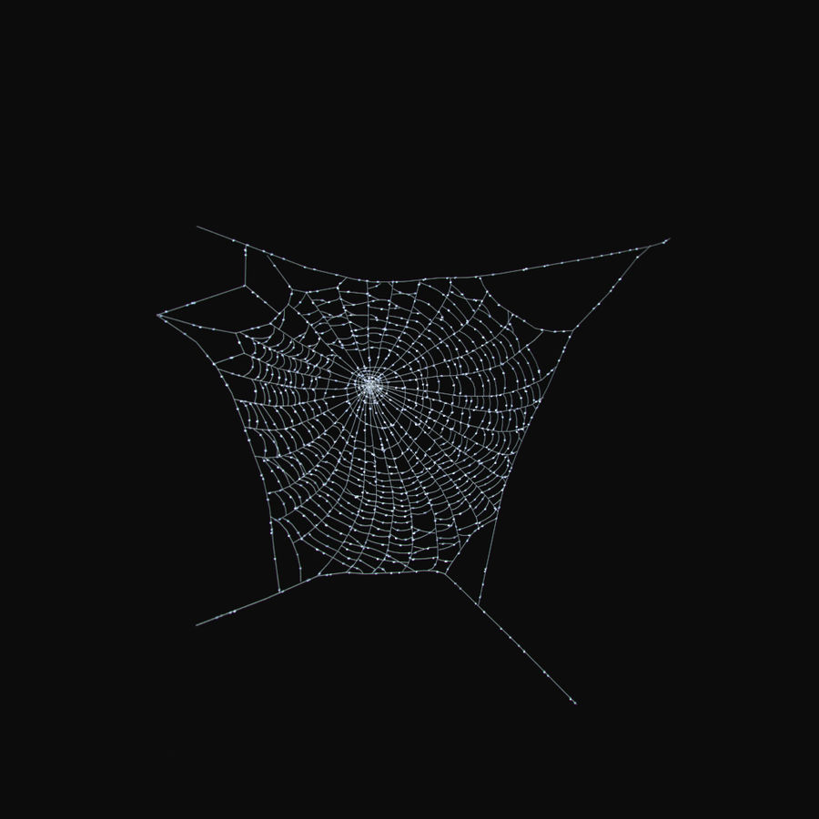 Spider Web royalty-free 3d model - Preview no. 5