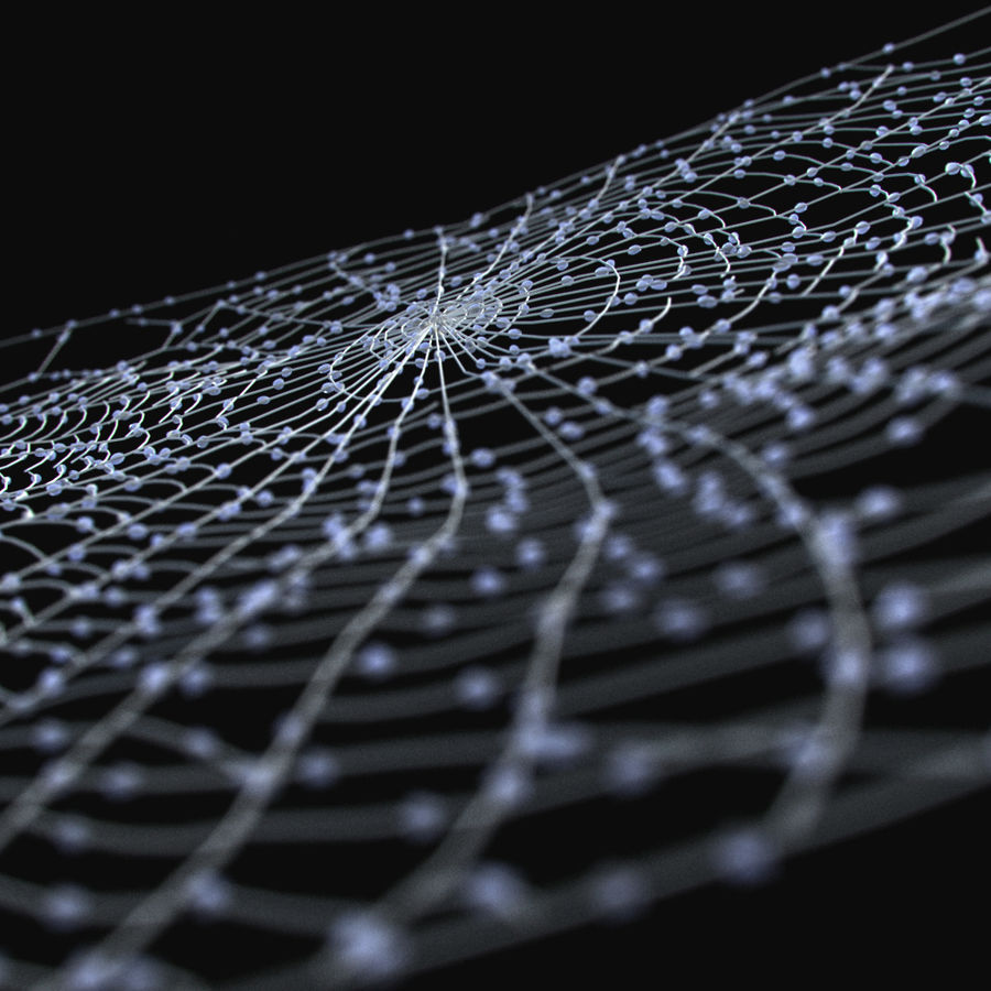 Spider Web royalty-free 3d model - Preview no. 3