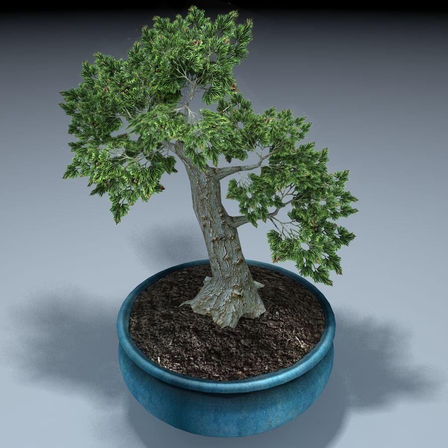 Bonsai Baum royalty-free 3d model - Preview no. 2