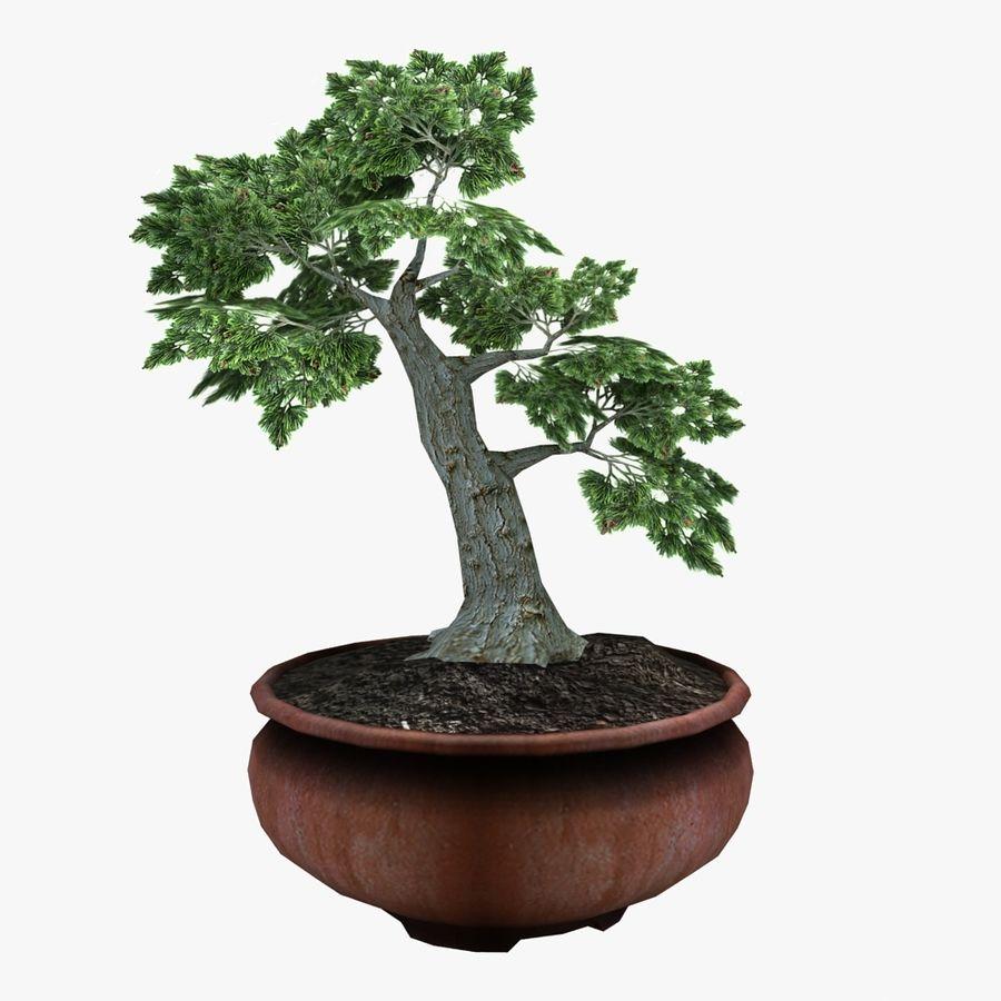 Bonsai Baum royalty-free 3d model - Preview no. 8