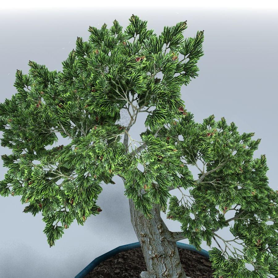 Bonsai Baum royalty-free 3d model - Preview no. 4