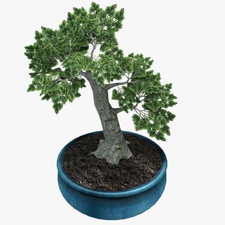 Bonsai Baum royalty-free 3d model - Preview no. 1