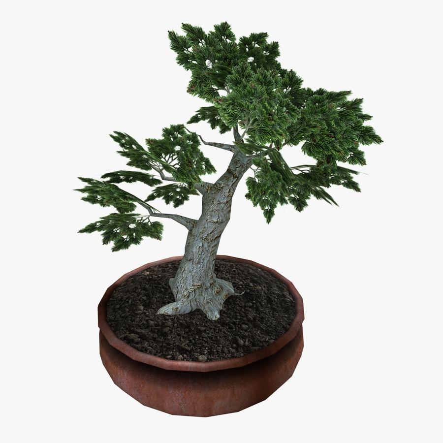 Bonsai Baum royalty-free 3d model - Preview no. 9
