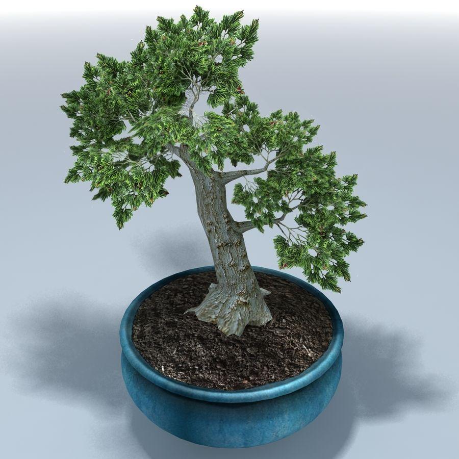 Bonsai Baum royalty-free 3d model - Preview no. 5
