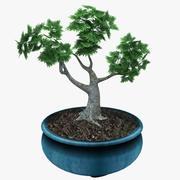 盆栽の木 3d model