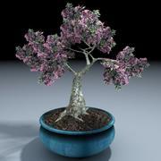 Bonsai Baum 3d model