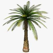 Drzewo palmowe 3d model