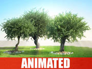 Realistic Animated Tree (olea) PACCHETTO COLLEZIONE (v ray, mental ray ,, v-ray 3d studio max e maya) 3d model