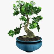 Bonsai Tree Pack 3d model