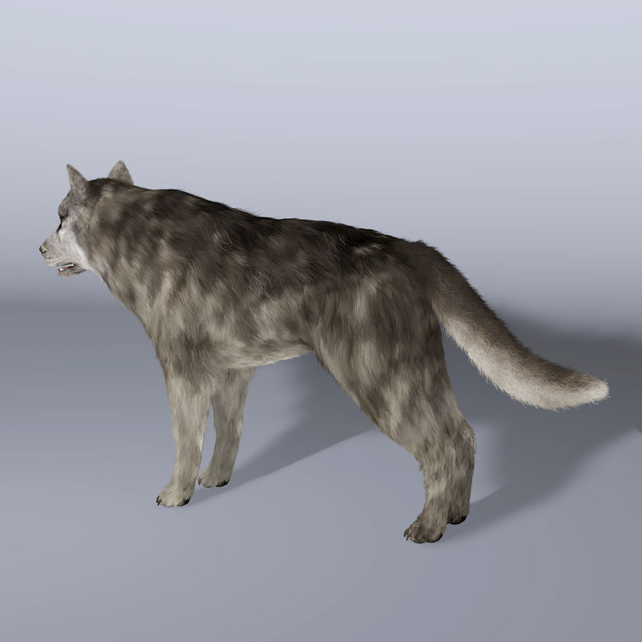 Poils De Loup royalty-free 3d model - Preview no. 4