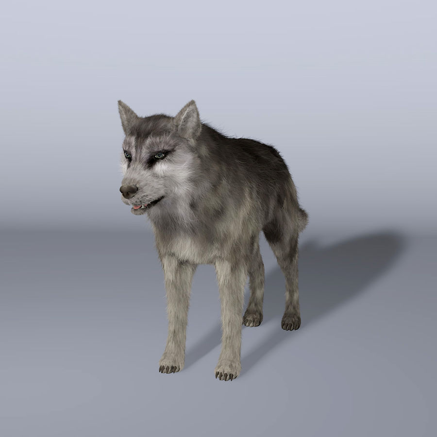 Poils De Loup royalty-free 3d model - Preview no. 2