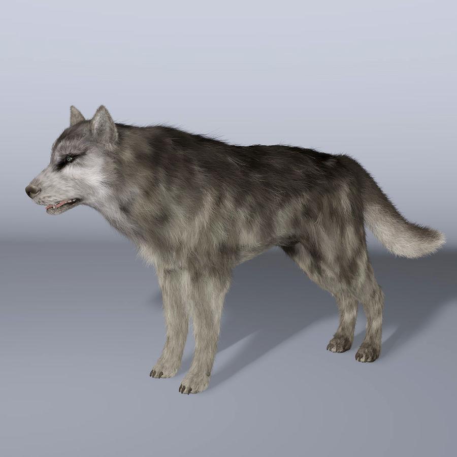 Poils De Loup royalty-free 3d model - Preview no. 1