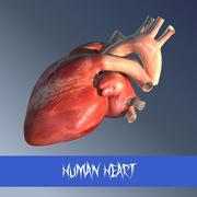 Ludzkie serce 3d model