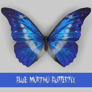 Blauer Morpho Schmetterling 3d model