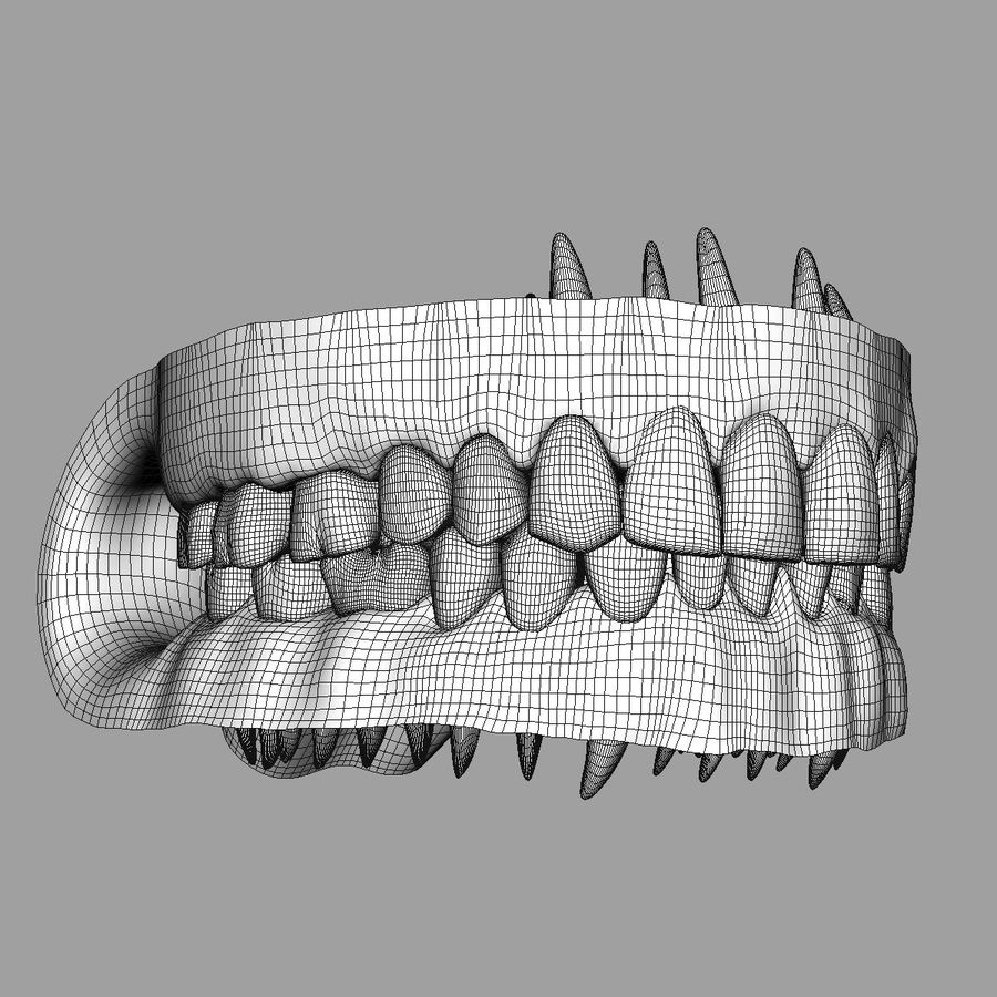 Teeth and Gums royalty-free 3d model - Preview no. 13