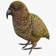 Kea papegaai 3d model